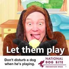 Dont Disturb, Puppy Biting, Sick Dog, Dog Safety, Dog Signs, Animals For Kids, Dog Training, Medical, Dogs