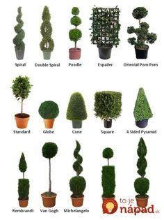 Toto ich omladí a budú krajšie, ako kedykoľvek predtým: Rada, ako tvarovať zeleň, vďaka ktorým bude vaša záhrada vyzerať miliónovo aj v zime!