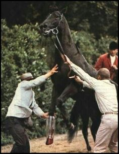 Ruffian - being aided with an air cast when she broke down in her final race