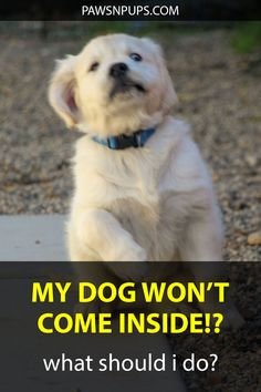 The most common reasons why a dog won't come inside when called are that he needs more exercise, is outside all the time, or has bad recall. Leash Training, Puppy Training Tips, Best Dog Training, Crate Training, Work Train, Service Dogs, Best Dogs, Dogs And Puppies, Exercise