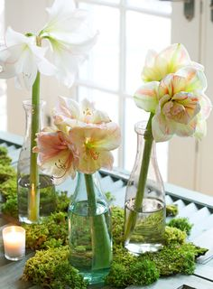 Cut amaryllis lasts up to two weeks if you trim the stems every few days to assist water absorption. More tips for gorgeous amaryllis displays: http://www.midwestliving.com/garden/flowers/easy-and-elegant-amaryllis-displays/