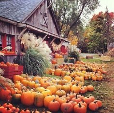 October Simple Pleasure: Shopping for the perfect pumpkin! (Cider mill in Rochester, Michigan) Autumn Scenes, Autumn Aesthetic, Happy Fall Y'all, Fall Pictures, Fall Pics, Belleza Natural, Fall Harvest, Harvest Time, Fall Pumpkins