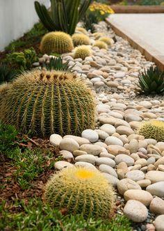 Echinocactus grusonii (Golden Barrel Cactus) with other cacti and decorative pebbles