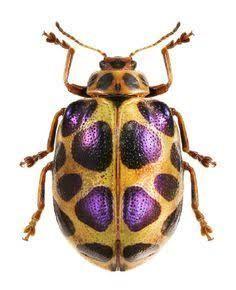 Image result for beetles