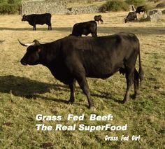 Grass Fed Beef: The Real Super Food