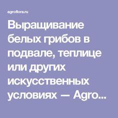 Выращивание белых грибов в подвале, теплице или других искусственных условиях — AgroFlora.ru