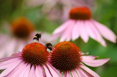 Cute Insects, Bee, Flowers, Plants, Animals, Honey Bees, Animales, Animaux, Bees