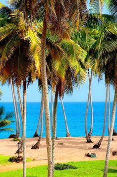 Hakuna Matata! different color Palm tree...who knew?? beautiful..e