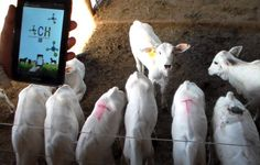 Instalar um biodigestor para processar os dejetos de animais confinados é uma solução de múltiplas vantagens ambientais e econômicas para o criador....
