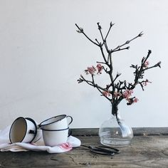 Can't believe that I'm already posting photos of Spring blossom in January but it may be a blessing in disguise because next week we have an Easter photoshoot at the cottages. Have you noticed any early Spring activity where you are ?