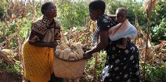 201201-oxfam-maissi-web.jpg 470×234 pikseliä