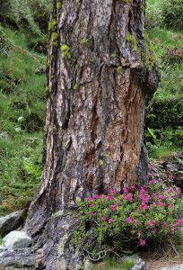 Baummeditation – Den Baum spüren