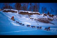 Burmeister rolls past Zirkle as mushers play Iditarod hopscotch on Yukon River   Alaska Dispatch News