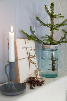 I love evergreens! It gives hope throughout the year! I love this idea and I think I am going to do this!! Love, love love!!!
