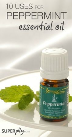 Peppermint is amazing! 10 fantastic uses for peppermint essential oil.