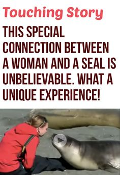 This seal was looking for a friend and it found one! This put a huge smile on my face <3. #wildlife #cute