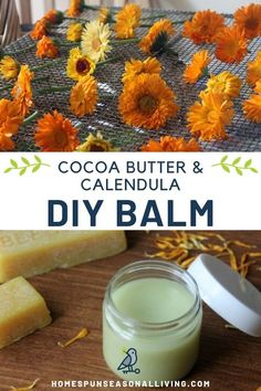 Soothe and nourish overworked hands and feet with the power of beeswax and natural ingredients in this DIY calendula cocoa butter balm. Natural Health Remedies, Herbal Remedies, Homemade Lip Balm, Herbs For Health, Eyeshadow Palette, Lip Gloss, Homemade Beauty Products, Calendula