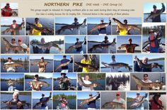 2 posts published by Wawang Lake on February 2015 Pike Fishing, Fishing Tips, Walleye Ice Fishing Lures, Crappie Jigs, Seven Pounds, Trophy Fish, Lake Resort, How Are You Feeling, Seasons