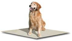 Dog Kennel and Dog Run Flooring from Kennel Store - dog kennel cover Dog Kennels And Crates, K9 Kennels, Types Of Flooring, Tile Flooring, Dog Kennel Flooring, Dog Kennel Cover, Dog Rooms, Getting A Puppy, New Puppy