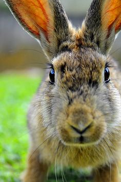 <3...A adorable bunny rabbit...<3