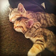 Sibling love.. so sweet! pic.twitter.com/AMfK4yUtK9