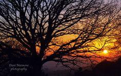 Winter sunset at Newlands Corner, Guildford, Surrey.