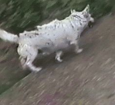 Old dog up to new tricks dog gifs cool gifs gifs gif funny gifs funny humor hilarious cute dog images cool images video gifs Funny Dogs, Funny Animals, Cute Animals, Humorous Cats, I Love Dogs, Cute Dogs, Tierischer Humor, Funny Humor, Animal Pictures