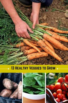 13 Super Healthy Vegetables to Grow in Your Garden This Spring >> http://www.hgtvgardens.com/photos/garden-to-table-photos/13-of-the-healthiest-vegetables-to-grow-in-your-garden?soc=pinterest