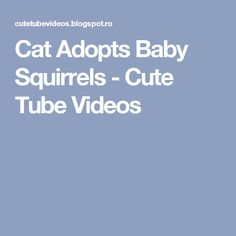 Cat Adopts Baby Squirrels  - Cute Tube Videos