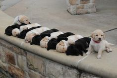 You can tell which one will be a good guard dog.