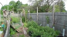 Tour my Dazzling Permaculture Backyard!