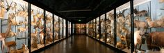 Tring Natural History Museum
