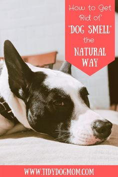 Does your house smell like dogs? If your house has started to smell like a kennel, then you need to deep clean your house. Click this pin to find out how I naturally clean and keep pet odor out of the house and keep it smelling nice and fresh all year round. #dogs #dogcare #dogtipscleaning #dogsmell #getridofdogsmell #dogtips #LoveYourDog #CleaningHacks #CleaningTips Dog Cleaning, Cleaning Hacks, Funny Dog Memes, Funny Dogs, Dog House Kit, Dog Lover Gifts, Dog Lovers, Dog Food Delivery, Living With Dogs