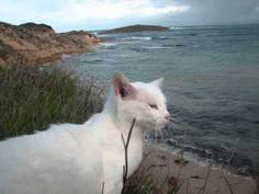 nasce il cats watching su pallosu dove i gatti scendono in spiaggia