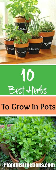 Indoor Container Gardening Best Herbs to Grow in Pots - Looking for the best herbs to grow in pots? We've got the 10 best ones that you should be planting right now! Fill up that windowsill and reap the rewards! Growing Herbs In Pots, Growing Vegetables, Diy Pergola, Container Gardening, Gardening Tips, Indoor Gardening, Culture D'herbes, Best Herbs To Grow, Pot Jardin
