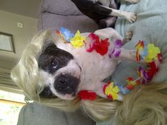 Dress up fun with our Chesney