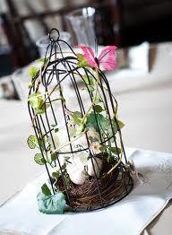 Birdcage ivy