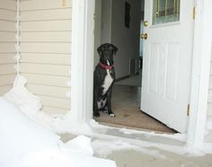 Teach a dog not to jump at the door