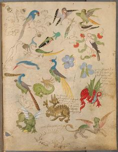 (1494)  --  Vögel und exotisches Getier mit Beischriften, 3r - The Illuminated Sketchbook of Stephan Schriber  - See more at: http://publicdomainreview.org/2012/06/15/the-illuminated-sketchbook-of-stephan-schriber-1494/#sthash.x6KphS7A.dpuf