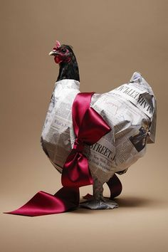 It must be hard to get a chicken to stand still long enough to gift wrap it!