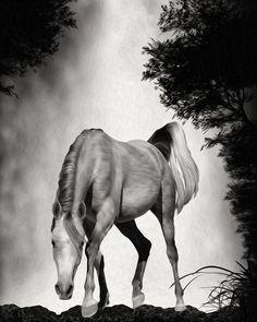 Mystery Horse.