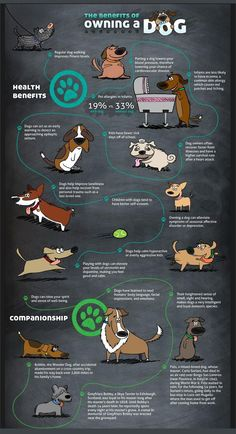 Some interesting benefits of owning a dog. <3 Bringing home a dog is always a wonderful feeling. As responsible humans, we must opt to adopt and spread awareness on the same. Visiting local shelters, reaching out to existing pet parents or animal welfare workers, and taking consent of all family members is an important part of deciding if you're ready for a dog and which dog would be the perfect match for your home and family :) <3 Go ahead. .Bring home a bundle of endless love and poop :D French Bulldog Puppies, Dogs And Puppies, Dog Expressions, Emotional Support Animal, Dog Mom Shirt, Dog Facts, Dog Mom Gifts, All Family, Dogs Of The World