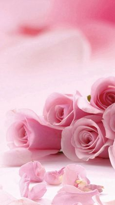 Pink Roses Flower Petals #iPhone #5s #wallpaper