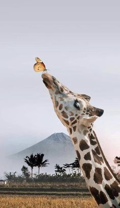 Giraffe Pictures, Baby Animals Pictures, Cute Animal Photos, Animals And Pets, Elephants Photos, Wild Animals, Baby Elephants, Cute Animals Images, Exotic Animals