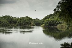 Only some 130 km from Bangalore, Ranganathittu Bird Sanctuary is easily a day trip.