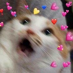 60 Ideas for memes apaixonados gatos Cute Baby Cats, Cute Baby Animals, Kittens Cutest, Cute Funny Animals, Funny Cats, Cute Cat Memes, Cute Animal Memes, Cute Love Memes, Cute Cat Wallpaper