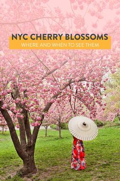 Your Essential Guide to Cherry Blossoms in NY - Where and When to Find Them // Local Adventurer #cherryblossom #nyc #newyork #manhattan #centralpark #newyorkcity #spring