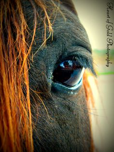A horse's eye catches everything.