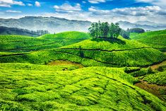 http://traveltriangle.com/blog/munnar-tourist-places/?utm_source=Facebook&utm_medium=FB_Wall&utm_campaign=WallPosts