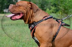 Best #Painted #Leather #Dog #Harness Is Padded From Inside $159.90 | http://www.all-about-cane-corso-dog-breed.com/